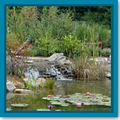 Q: Is there any danger to my fish if the pond is always in direct sunlight?