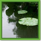 Q: If I treat my pond for weeds and it rains, will the treatment still work?