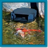 Q: The water level in my pond keeps dropping below my skimmer opening. What should I do?