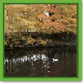 Q: I have a lot of leaves blowing into my pond. Will the bacteria still work this time of year?