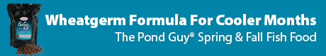 Wheatgerm Formula for Cooler Months - The Pond Guy® Spring and Fall Fish Foodt