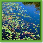 Q: Should I treat my pond weeds now, or will they die on their own now that it's getting colder?