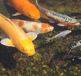"Q: What do you really mean when you say fish are ""dormant"" for the winter? Do they sleep?"