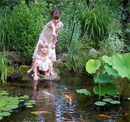 Q: I would like to build a backyard pond. What do I need to know?