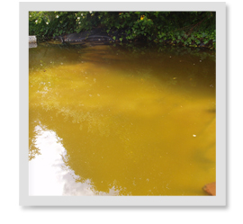 What causes pond odor?