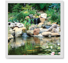 How many and what type of plants should I have in my pond?