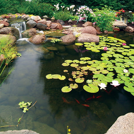 Choosing a Pond Kit