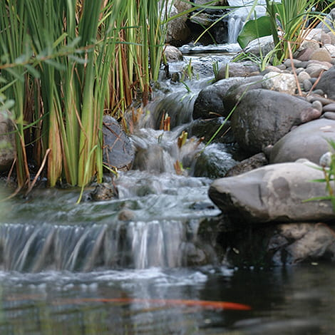 Choosing Your Water Feature - Pond vs Pondless