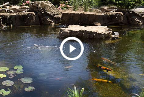 Aeration systems water garden aerator the pond guy for Fish pond aerator