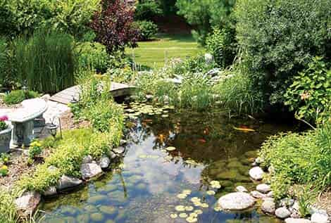 Water garden supplies fish pond supplies the pond guy for Ornamental fish pond supplies