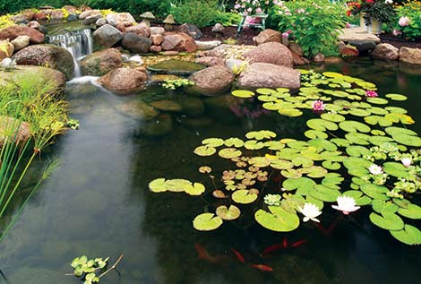 Pond & Water Feature Kits