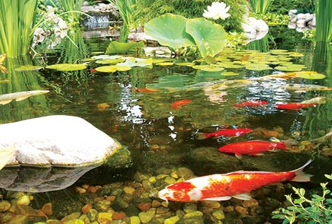 Pond Maintenance Packages