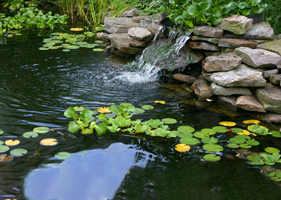 Pond and Water Garden Supplies   The Pond Guy