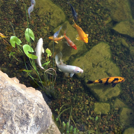 I try to keep my pond clean, but is there anything else I should do to prevent my fish from getting sick?