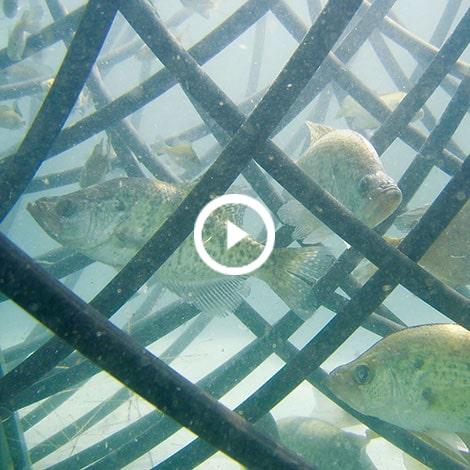 Create Fish Habitat