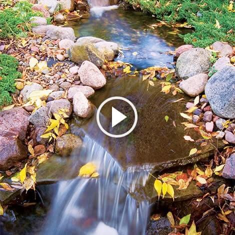Water garden shutdown preparing pond for winter fall for Preparing pond water for fish