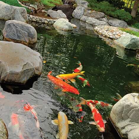 Fish in the pond hookup service
