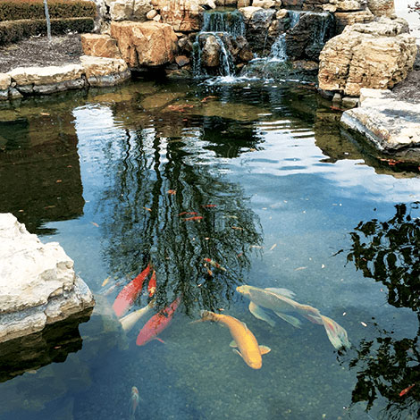 Fish feeding tips what to feed pond fish the pond guy for Koi pool cue
