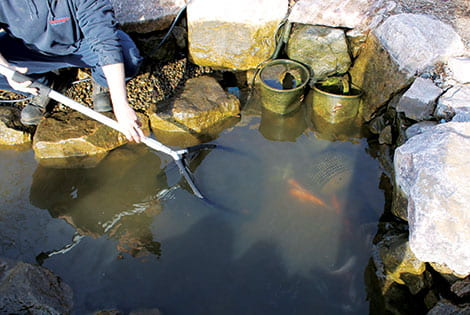 Drain the pond lower to make it easy to catch your fish.