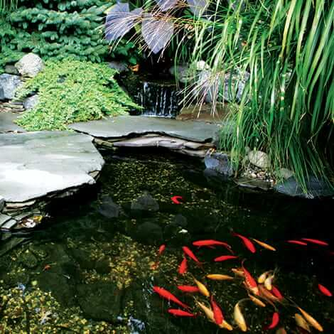 Understanding the nitrogen cycle fish care the pond guy for Koi pond jets