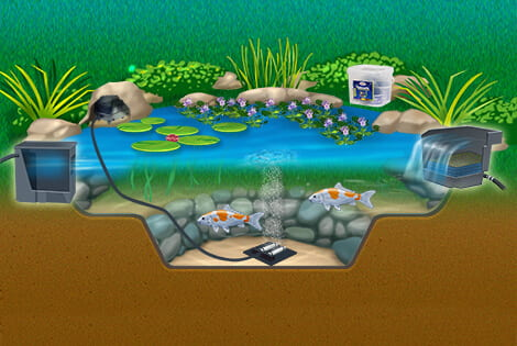 Key elements to a clean, healthy & balance ecosystem: filtration, aeration, aquatic plants, fish &natural bacteria.