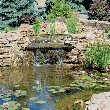 Other Water Garden Articles