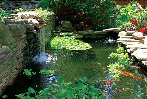 Caring for aquatic plants aquatic pond plants for Outdoor fish pond care