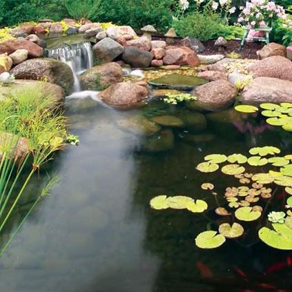 Water Garden 101