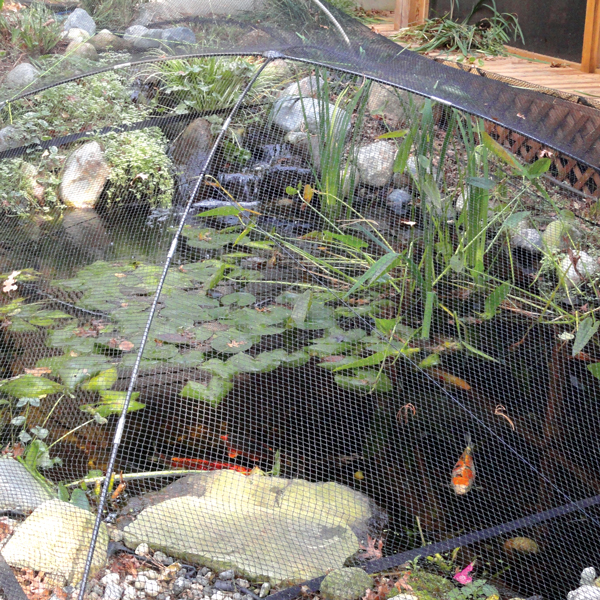 Pond protection net atlantic pond net the pond guy for Fish pond stuff