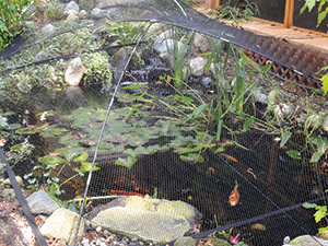 Pond netting amp covers atlantic pond amp garden protector net kits