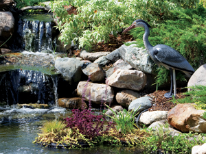 Blue heron decoy fish pond protection the pond guy for Moulded fish ponds