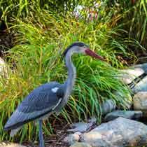 The Pond Guy Blue Heron Decoy