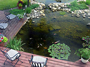 Fish pond management the pond guy the pond guy for Garden pond care