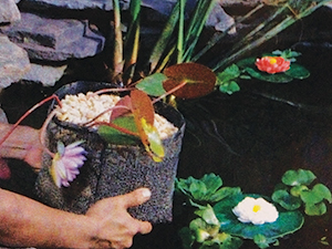 The Pond Guy(r) Plant Bag - Flexible Pond Planter