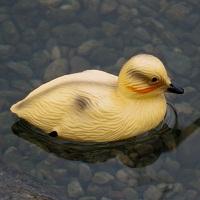 Laguna Floating Pond Ducklings