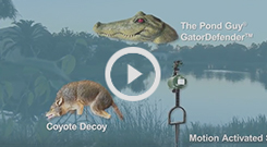 Pond & Lake Predator Control Video