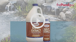 The Pond Guy(r) Barley Extract Video