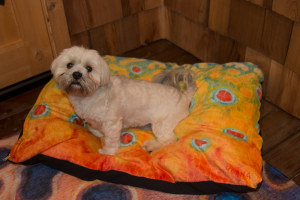 Deyoung Fish Flank Dog Beds