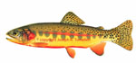 LIMITED EDITION PRINT VOLCANO CREEK GOLDEN TROUT