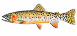 LIMITED EDITION PRINT COLORADO RIVER CUTTHROAT