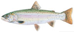 LIMITED EDITION PRINT LAHONTAN CUTTHROAT