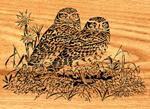 Burrowing Owls Project Pattern