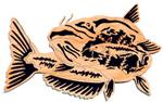 Catfish - Nature's Majesty Project Pattern