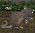 Giant Rat Woodcraft Pattern