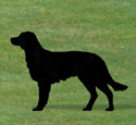 Irish Setter Shadow Woodcrafting Pattern