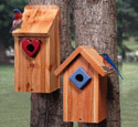 Bluebird House Duo Wood Project Plan