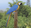 3D Life-Size Blue Macaw Wood Pattern