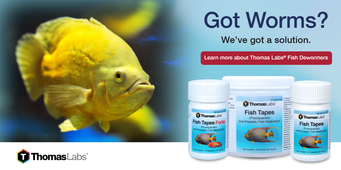 Treating Worms In Fish Aquariums