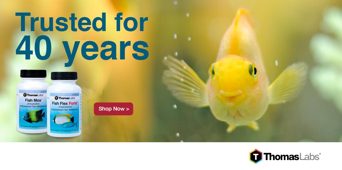 fish banner=