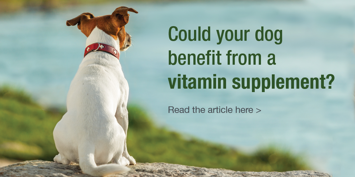adv vitamins for dogs